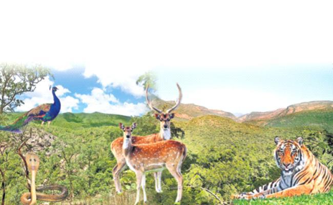 Penchalakona Sanctuary Recognised As Eco Sensitive Zone - Sakshi