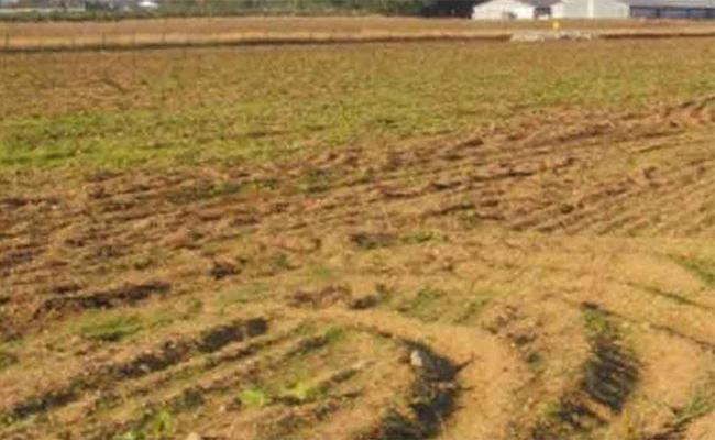 Government Land Was Confiscated By A  Former TDP Councilor - Sakshi