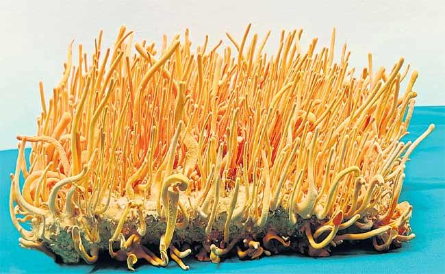 Mushroom Farming Special Story In Sakshi Sagubadi