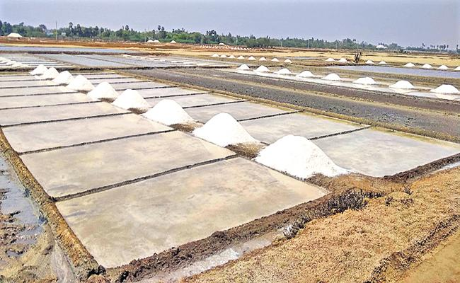 Good days for the salt farmer in AP - Sakshi