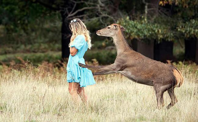 Deer Attack On Girl Goes Viral - Sakshi