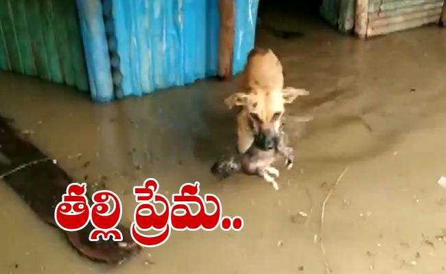 Dog Rescue Her Puppy And Shift It To A Safe Location - Sakshi