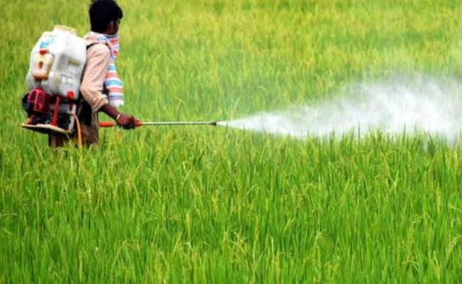 Prohibited Glyphosate Sales  Are Still  Contineous In State - Sakshi