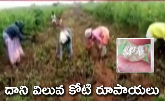 Precious Diamond Found On Kurnool District - Sakshi