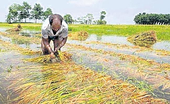 Crop Loss In 14 Lakh Acres In Telangana - Sakshi