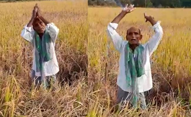 Telangana Farmer Viral Video Over Crop Damage - Sakshi