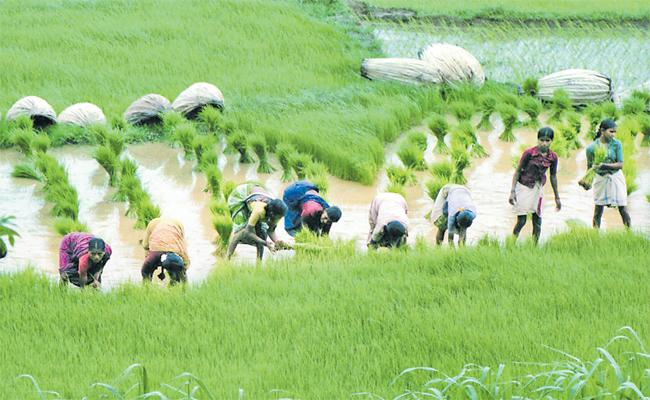 Yogendra Yadav Article On Agriculture Bill - Sakshi