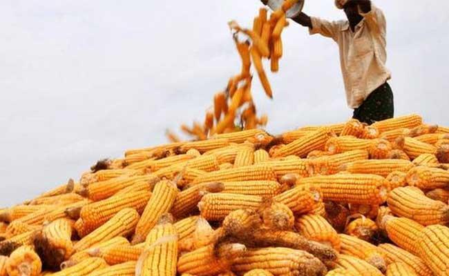 Markfed Officials Illegal Policies To Benefit Merchants In Telangana - Sakshi