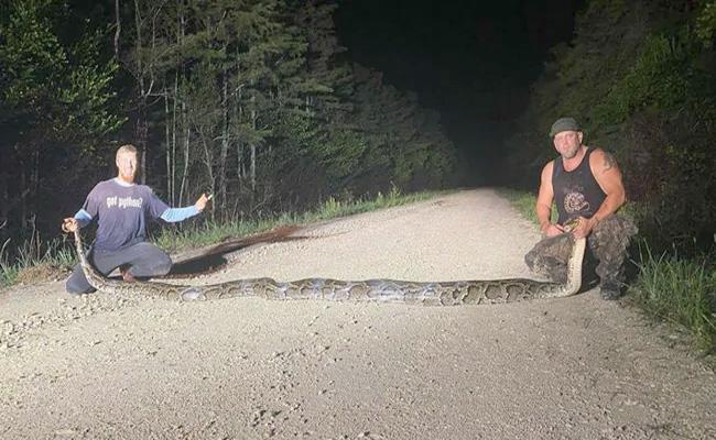 Huge Python Sets New Record In Florida, At 18.9 feet - Sakshi