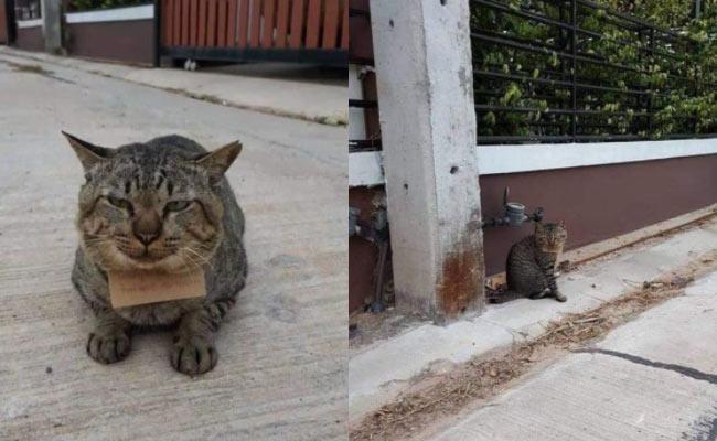 Missing Cat Returned Home With Debt In Thailand - Sakshi