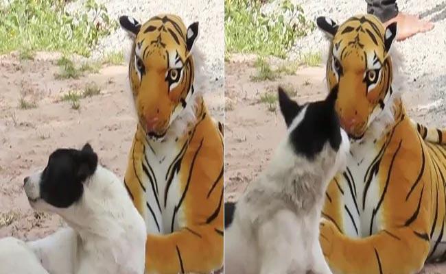 YouTuber Pranks Animals With Tiger Toy Video Wins Internet - Sakshi