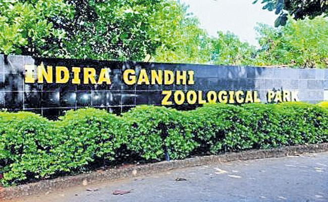 Visitors Allowed Into The Zoo - Sakshi
