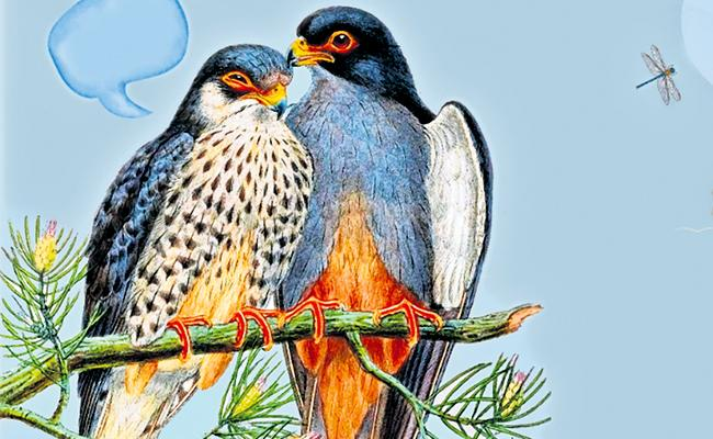 Special Story On Amur Falcons Journey Through World - Sakshi