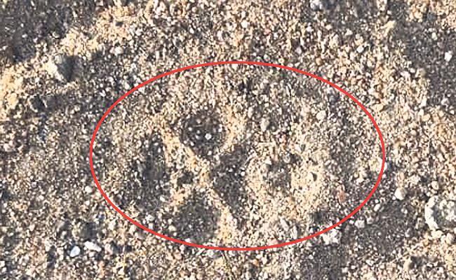 Leopard Roaming In Aksanpally - Sakshi