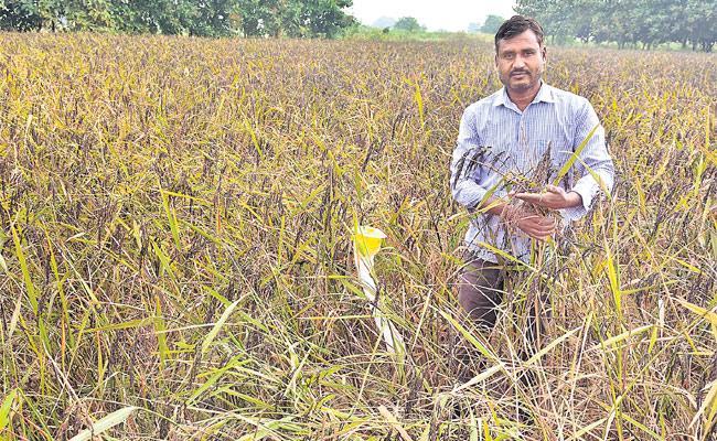 Farmer Mylaram Venkanna Farming Natural Organic Agriculture - Sakshi