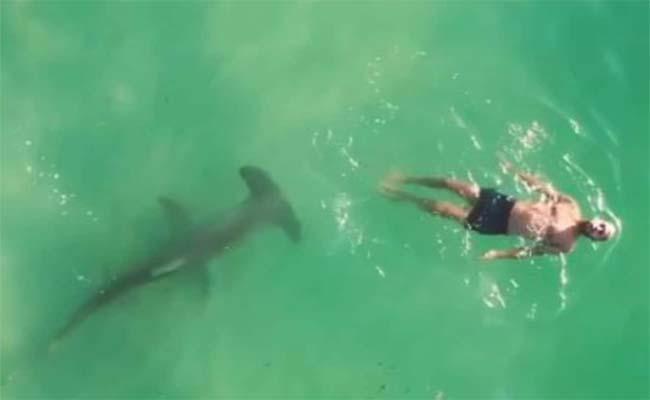 Terrifying Video: Man Swims Near Shark - Sakshi