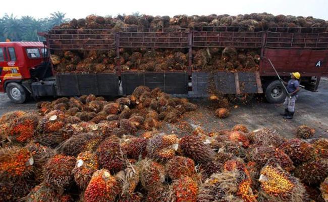 India slashes import tax on crude palm oil to 27.5pc - Sakshi