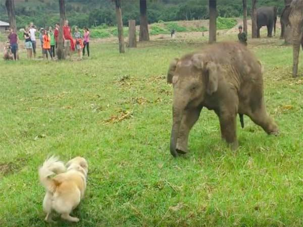 Viral: Baby Elephant Plays With Dog Video - Sakshi