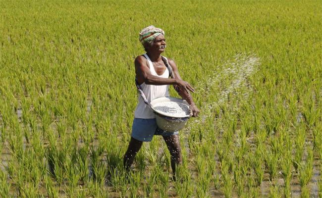 Rabi Cultivation Reached One Lakh Hectares In 15 days - Sakshi