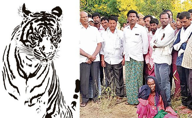 With In A Days Another Tribal Woman Killed In Tiger Attack - Sakshi