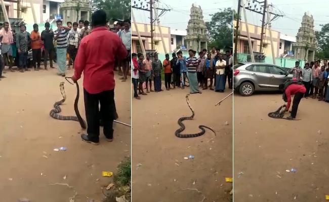 King Cobra found Hiding Inside Bike in Sirkakulam District - Sakshi