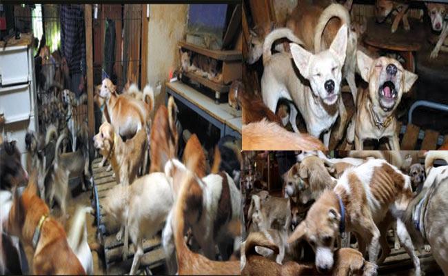Japan Huge Dogs Crammed Into House - Sakshi