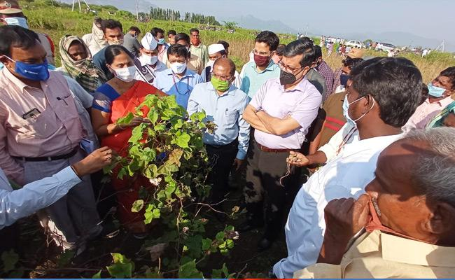 Central Committee Tour In Flood Damage Districts Krishna And Anantapur - Sakshi
