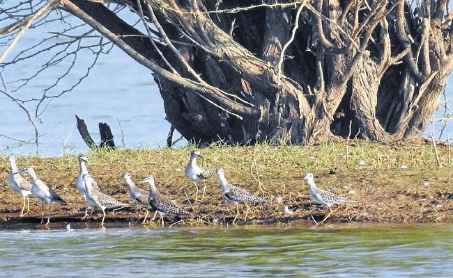 Estimated That 120 Bird Species Live In Vijayawada Region - Sakshi