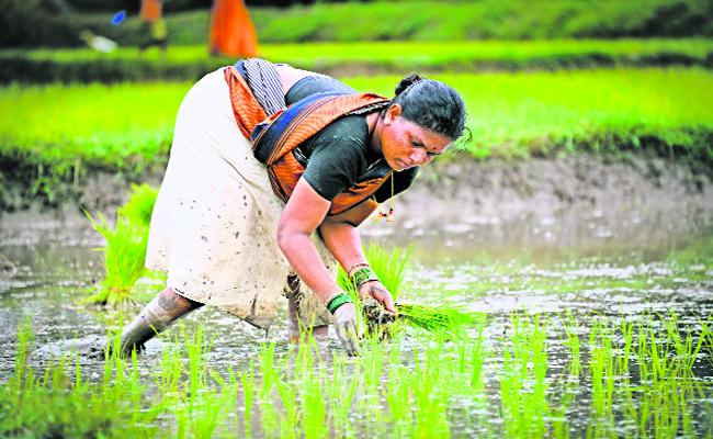 AP Govt spends on agriculture and allied sectors 70percent in Employment Guarantee Works - Sakshi