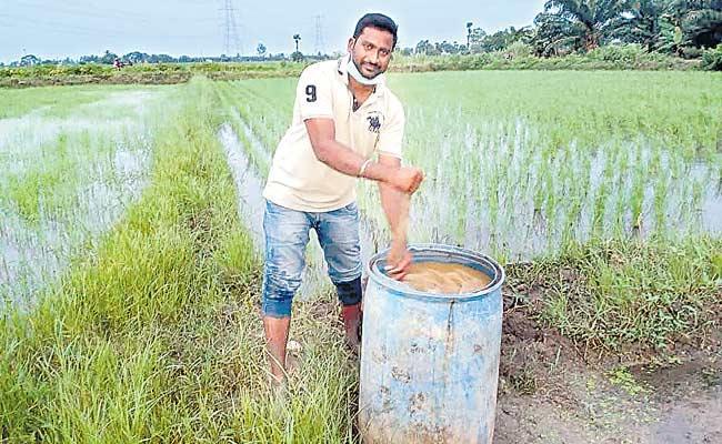 Garapati Vijayakumar Farming Hybrid Seedlings In East Godavari District - Sakshi