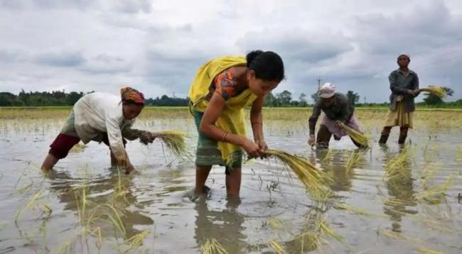 China Buys Indian Rice for First Time in Decades - Sakshi