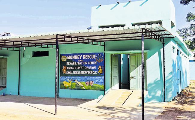 Family control also for monkeys - Sakshi