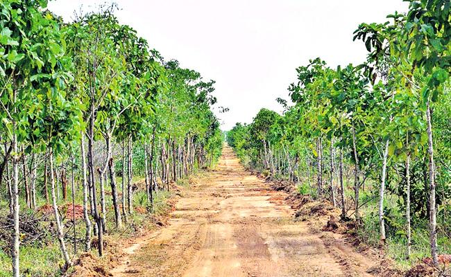 Singayapalli Forest Is Full Of Greenery With Revival Works - Sakshi