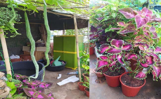 These Couple Made Terrace Garden In Prakasam - Sakshi