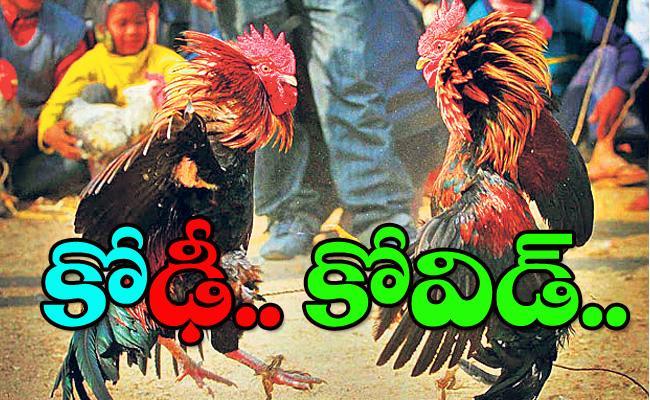 Coronavirus Impact on Sankranti Cock Fights in Telugu States - Sakshi