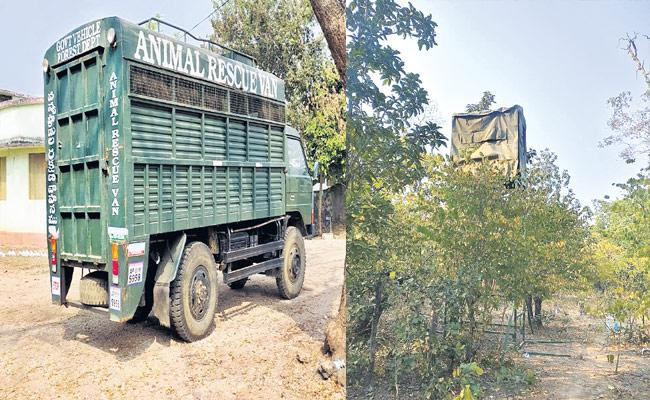 Adilabad Forest Officials Ready To Catch Tiger That Killed Two - Sakshi