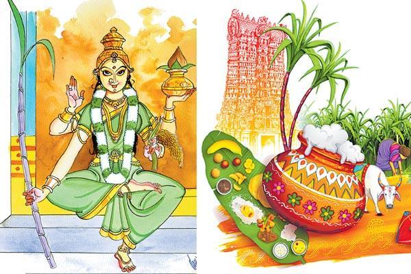 Three Festival of Wealth - Sakshi