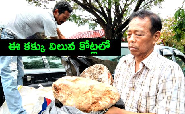 Highest Rate for Whale in Thailand - Sakshi