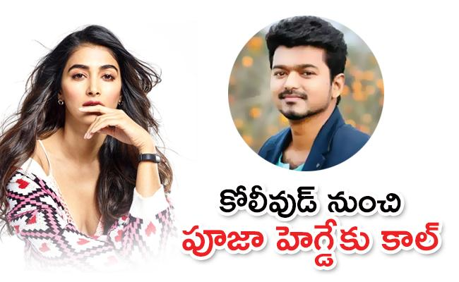 Vijay Next Movie Will Have Pooja Hegde As The Female Lead - Sakshi