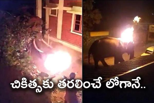 Tamil Nadu Elephant Dies Over Resort Owner Through Burning Tire - Sakshi