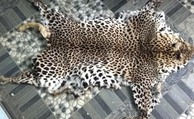 Leopard Skin Seized 3 Detained Srisailam Project Colony Prakasam - Sakshi