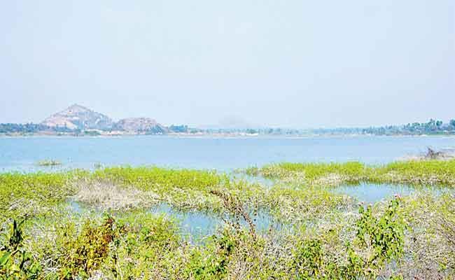 Godavari water Reaches Tail End Areas In Suryapet - Sakshi