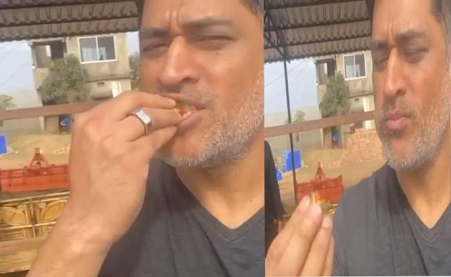 MS Dhoni Shared Hillarious Video About Tasting Of Fresh Strawberry - Sakshi