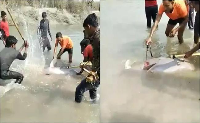 Gangetic Dolphin Beaten To Death By Villagers In Pratapgarh Goes Viral - Sakshi