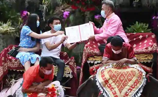 Valentines Day Mass Wedding Ceremony Marriages On Elephants - Sakshi