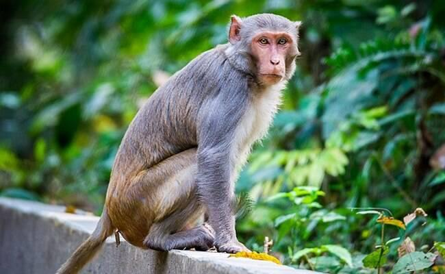 8 Days Old Babies Stolen By Monkey Group, Among Them One Child Found Dead In water - Sakshi