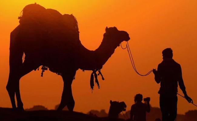Dubai Man and Girlfriend Arrested For Steal Rare Newborn Camel - Sakshi