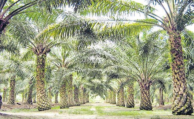Telangana Government Sanctions 1.3 Lacks Acres To Oil Fed - Sakshi