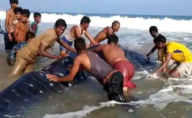 18 Foot Whale Comes To Sea Coast In Orissa - Sakshi
