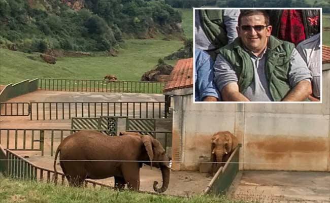 Zookeeper Deceased By Elephant Trunk In Spain - Sakshi